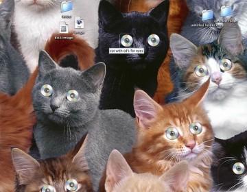 catcds